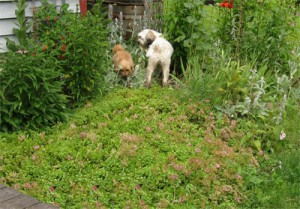 Red & Baxter in the garden