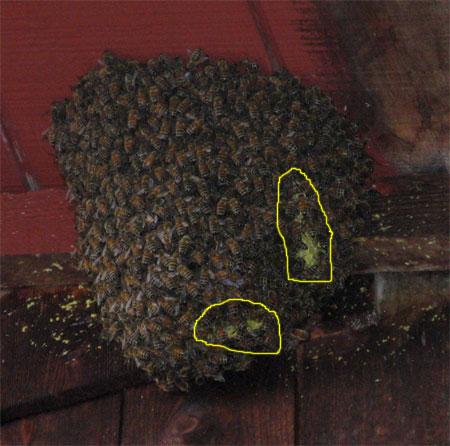 bees-honeycomb