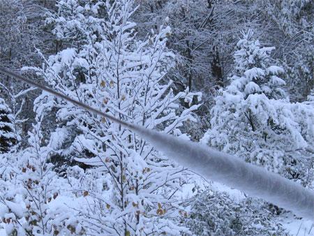 snow-clothesline-trees