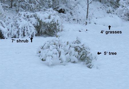 shrubs-in-snow