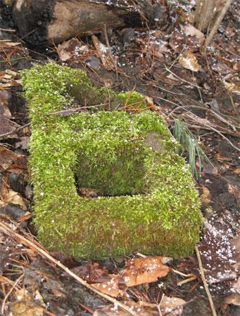 mossy concrete