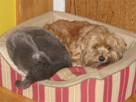 Red & Magic (dog & cat) nap