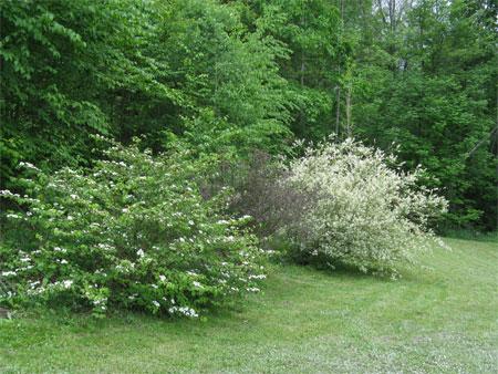 3 shrubs