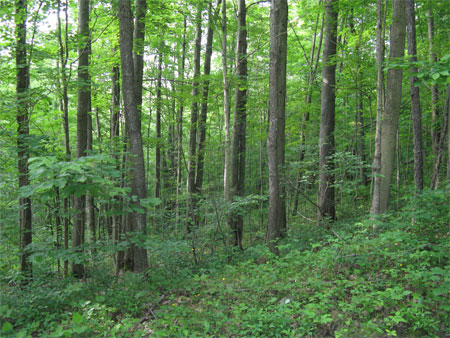 more woods