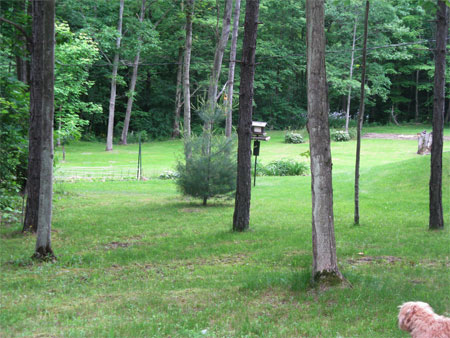 neighbor's lawn
