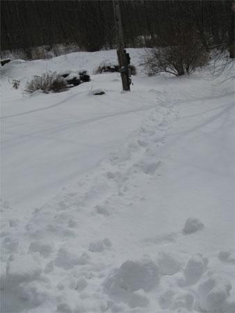 meter reader's tracks