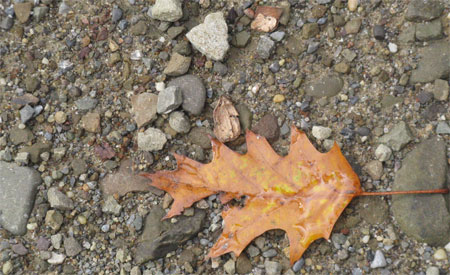 oak leaf holding water