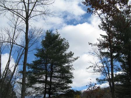 pines & sky
