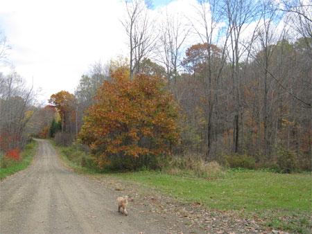 rounded oak