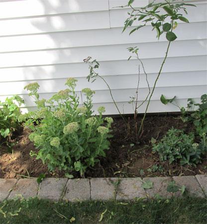 garage garden in process