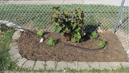 corner garden, after