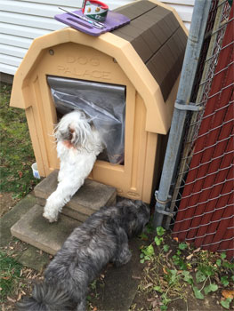 Baxter goes in the dog house