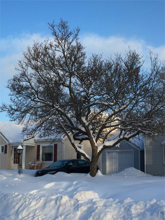 snow outline on tree