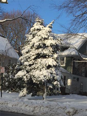 sun on snow on pines