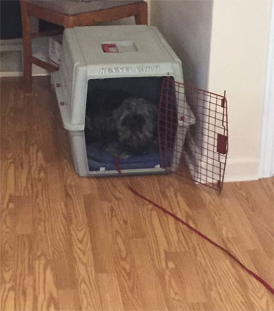 Jack in the crate