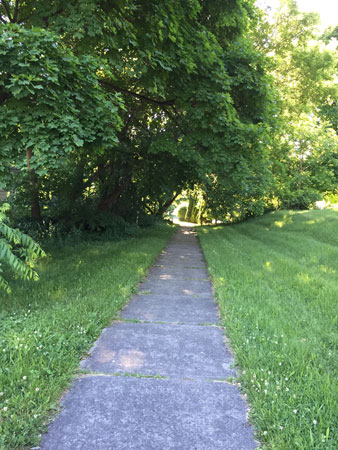 shady walking path