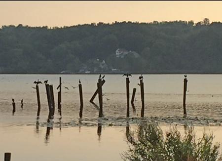 Bay road pilings