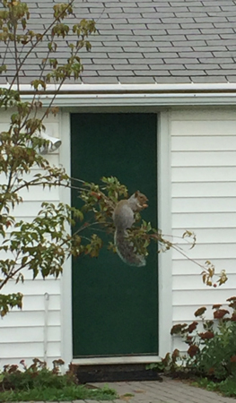 squirrel eating in the tree
