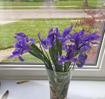 gifted iris