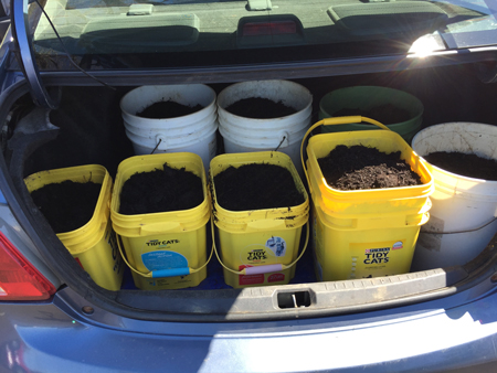 trunk full of leaf mulch