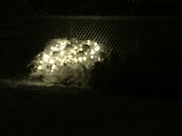 net lights on a shrub in snow