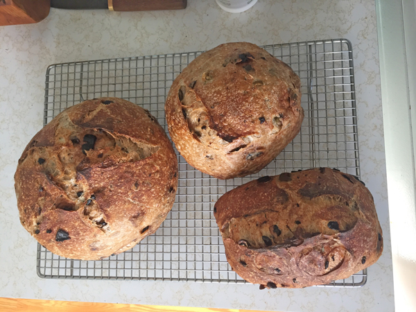 3 loaves olive sourdough bread