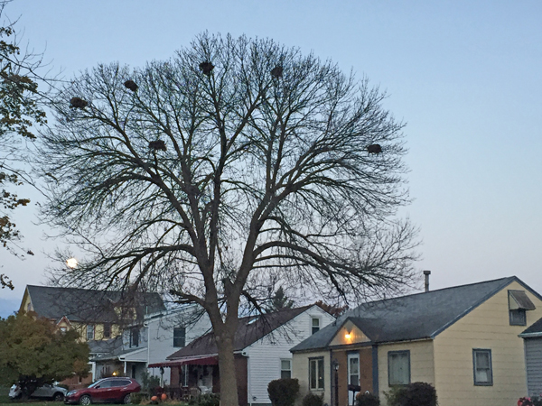 tree of nests