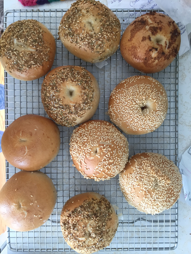 sourdough bagels, baked