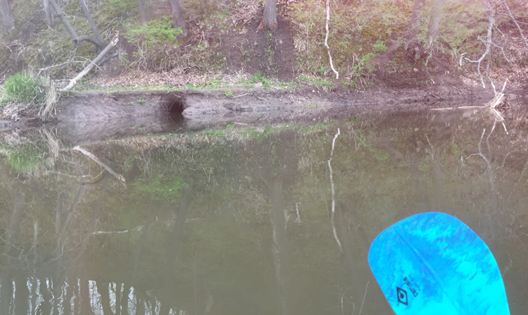 critter home in the creek bank