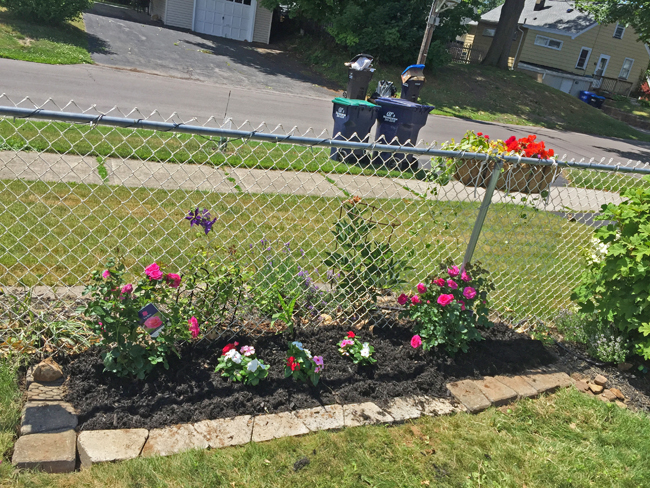 extended garden bed with roses